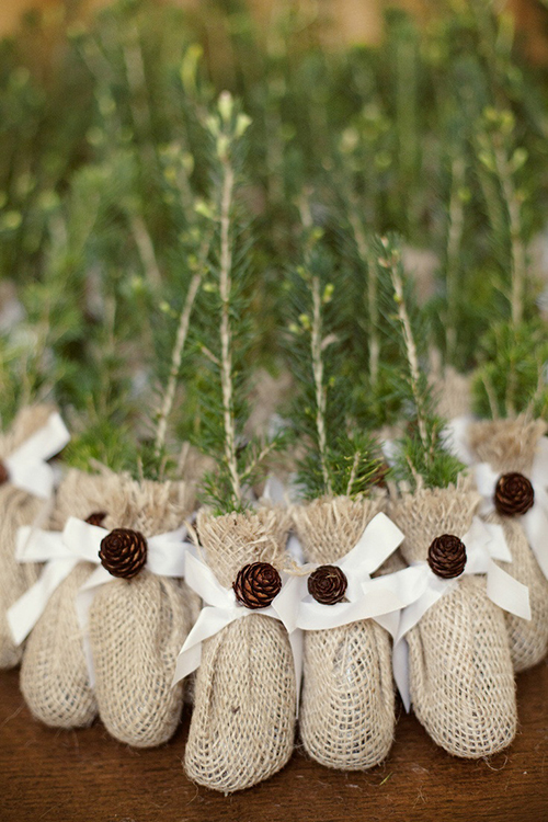 evergreen-saplings-wedding-favor